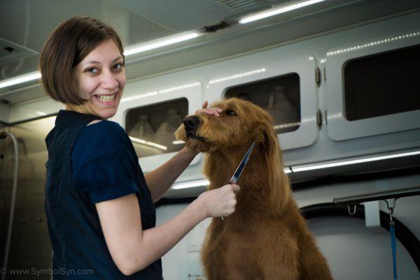 Video Production Calgary Dog grooming